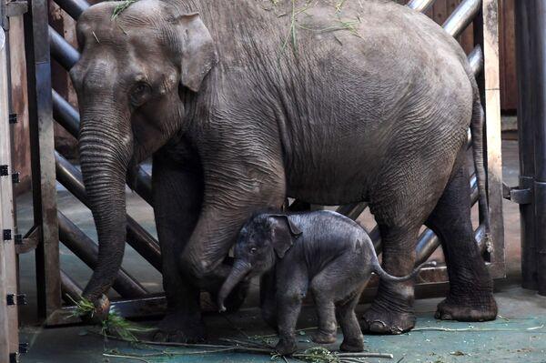 Novorozeně asijského slonu v Moskevské zoo - Sputnik Česká republika