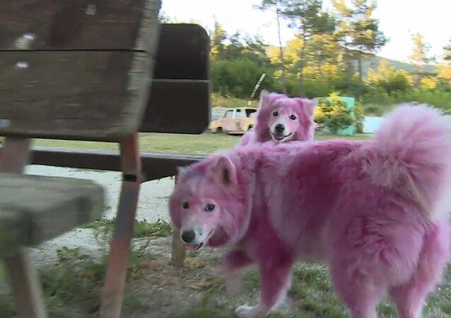Psi obarvení narůžovo zachráněni před tyrany