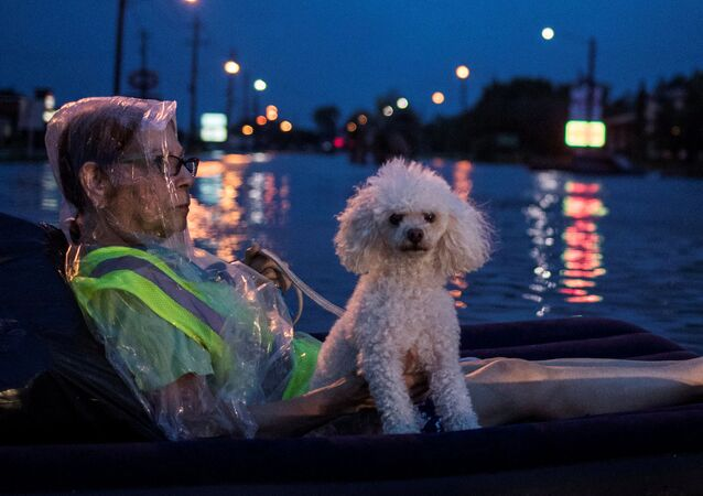 Starší paní a její pudl na nafukovací matraci čekají na pomoc po hurikánu Harvey, Texas, USA