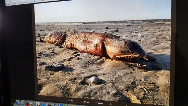 Záhadná bytost, vyplavenána na břeh v Texasu - Sputnik Česká republika