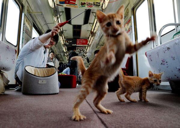 Cestující si hrají s koťaty v jídelním voze speciálního vlaku pro kočky v Ogaki, Japonsko - Sputnik Česká republika