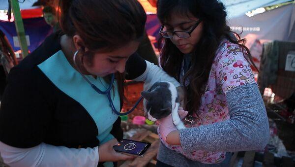 Na světě jsou dobří lidé: v Mexiku otevřeli útulek pro zvířata zraněná při zemětřesní - Sputnik Česká republika