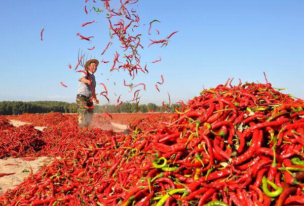 Sušení červených chilli papriček v čínské vesnici Čang-jie - Sputnik Česká republika