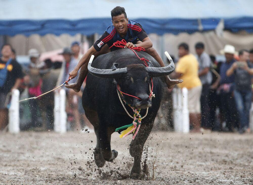 Účastník tradičních závodů na buvolech v Thajsku