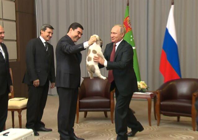 Prezident Turkmenistánu daroval Putinovi štěně pasteveckého psa