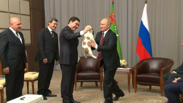 Prezident Turkmenistánu daroval Putinovi štěně pasteveckého psa - Sputnik Česká republika