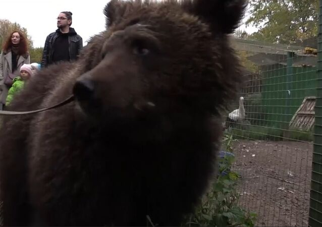 U Čeljabinsku zachránili medvědici