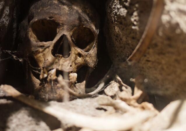 Starobylá lebka (ilustrační foto)
