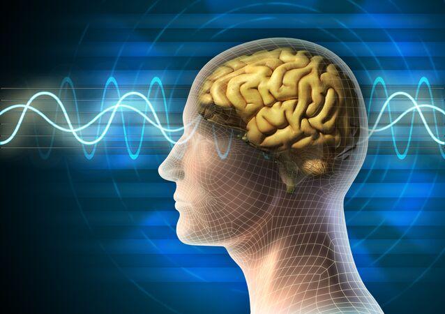 Mozek člověka