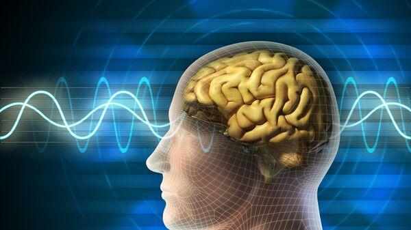 Mozek člověka - Sputnik Česká republika