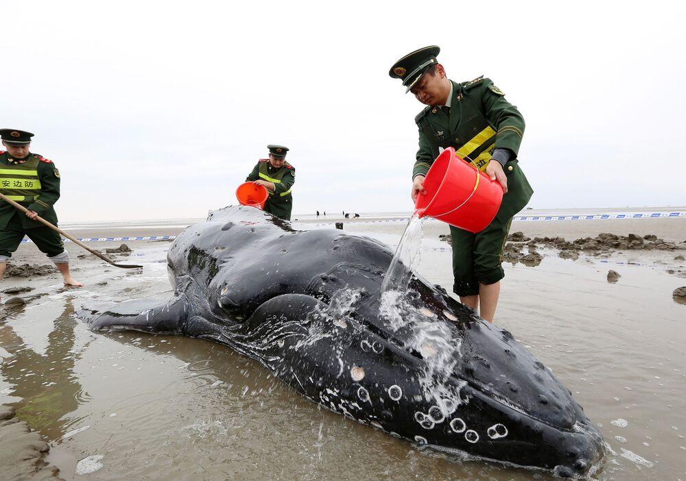 Čínští policisté polévají vodou velrybu, jež se vyhodila na břeh v městě Cidun