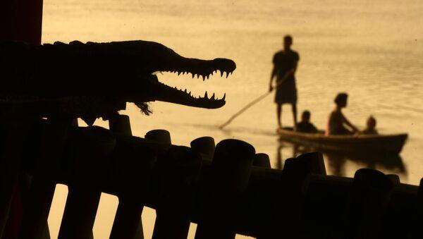 Muži loví ryby vedle krokodýla. Ilustrační foto - Sputnik Česká republika