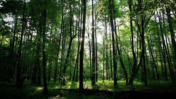 Bělověžský prales - Sputnik Česká republika