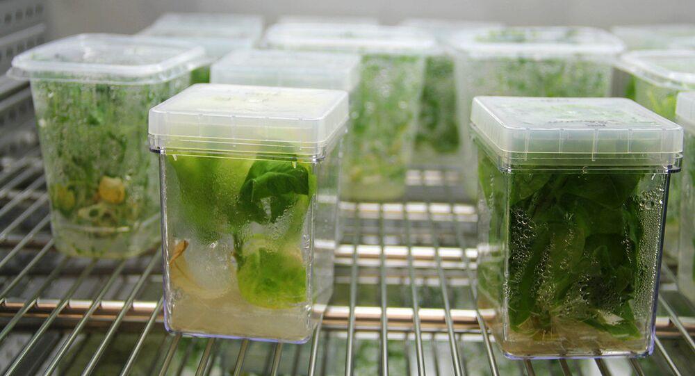 Rostliny v laboratoři Moskevského fyziko-technického institutu. Ilustrační foto