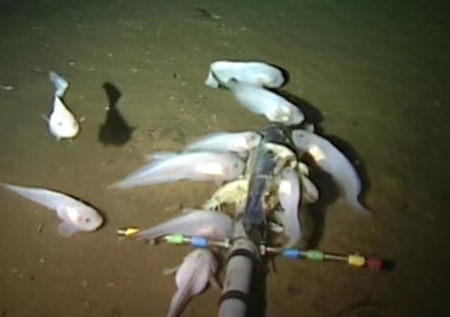 Ryby v Mariánském příkopu