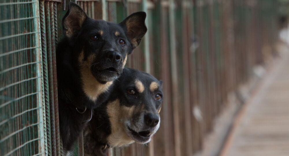 Útulek pro toulavé psy