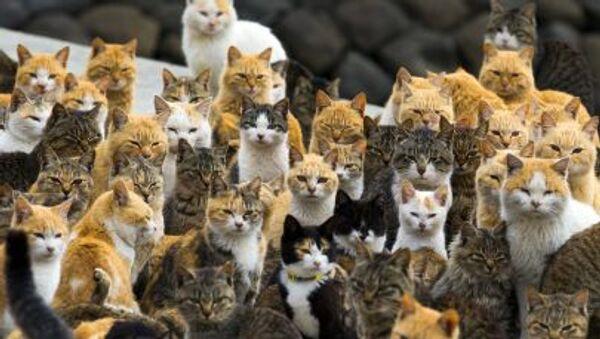 Kočky. Ilustrační foto - Sputnik Česká republika