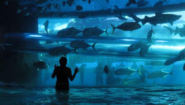 Akvárium. Ilustrační foto - Sputnik Česká republika