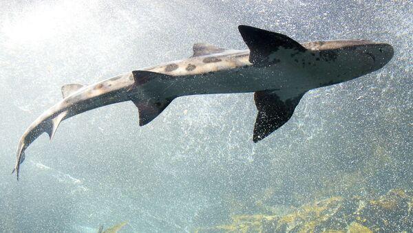 Žralok - Sputnik Česká republika