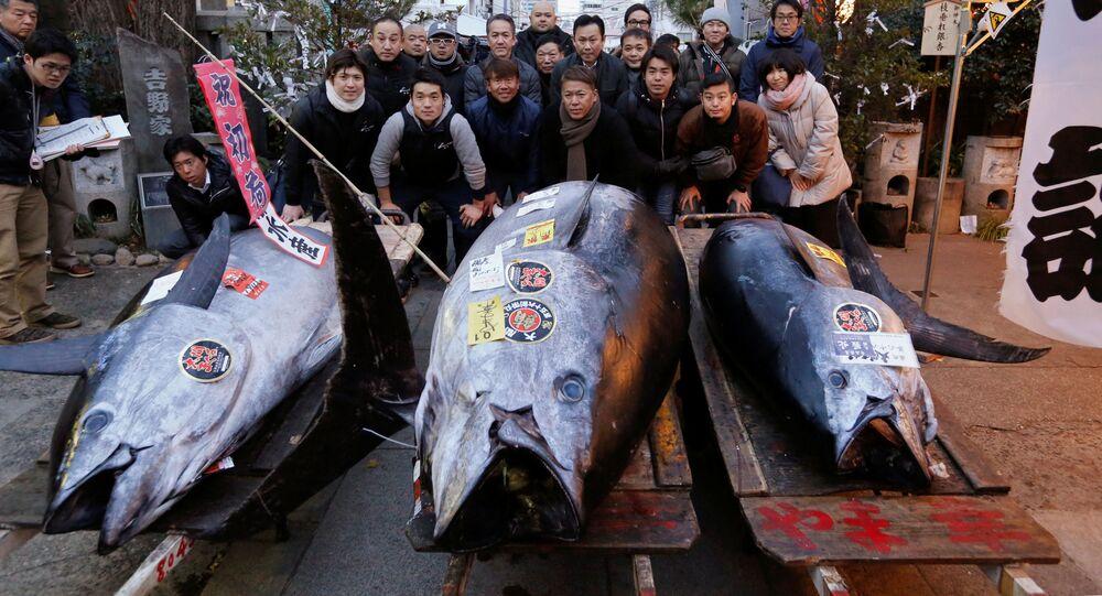Tuňák modroploutvý