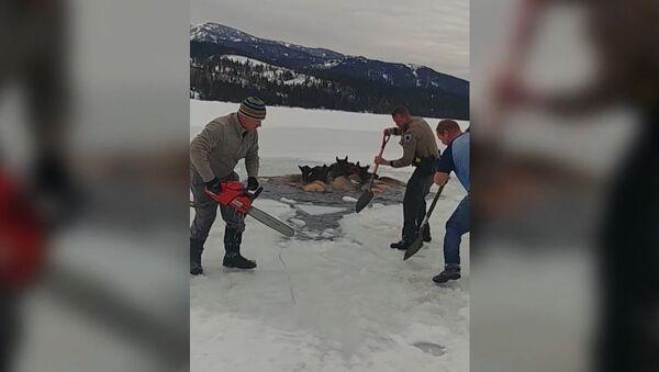 Obyvatelé Wyomingu přišli na pomoc losům, kteří se propadli do ledového jezera - Sputnik Česká republika