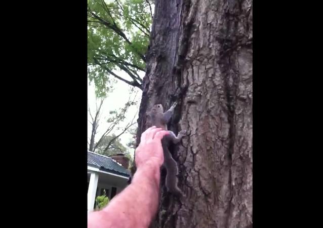 Americká rodina vypouští veverku na svobodu, ale se pak stalo nenapravitelné
