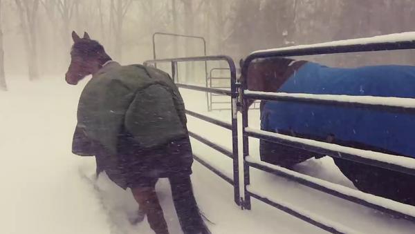 Majitel pustil koně běhat během sněžení, jejich reakce rozesmála internet - Sputnik Česká republika