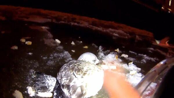 Záchranář skočil do ledové vody, aby vytáhl zamrzlého racka z Něvy - Sputnik Česká republika
