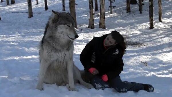 Vlk Kekoa a Danielle - Sputnik Česká republika