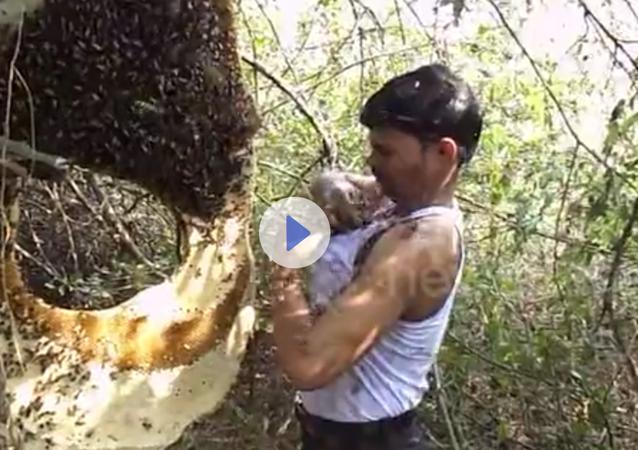 Ind si zastrčil pod tričko včelí roj