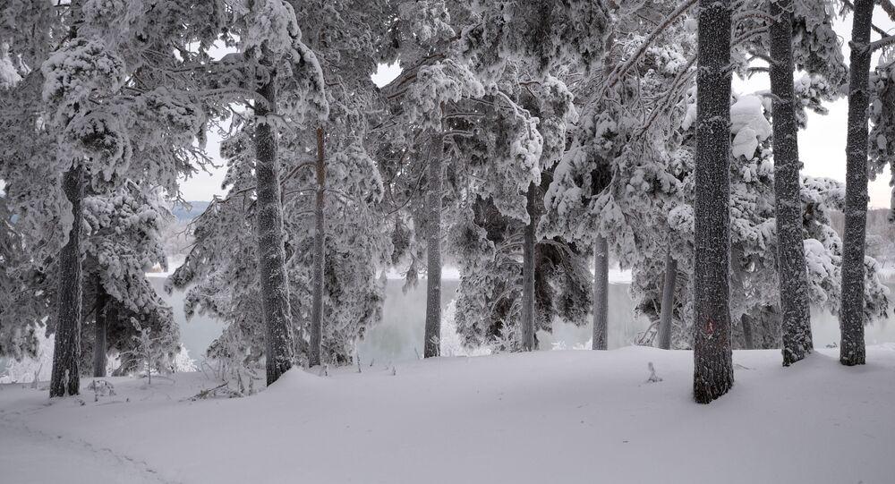 Zasněžené stromy