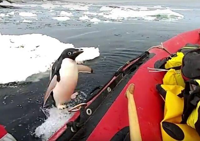 """Na Antarktidě natočili, jak tučňák """"navštívil"""" vědce"""