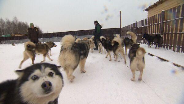 """V """"ruzské Aljašce"""" dostali toulaví psi druhou šanci. Video - Sputnik Česká republika"""