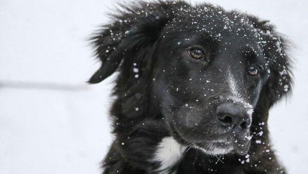 Černý pes - Sputnik Česká republika