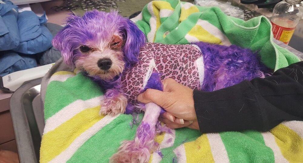 Violet ukázala svou vůli k životu