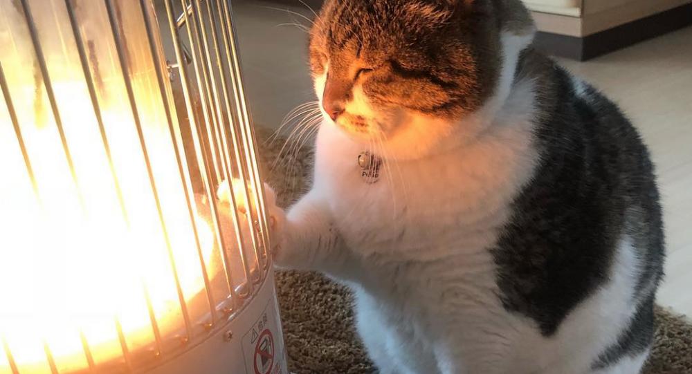 Kocour zamilovaný do ohřívače