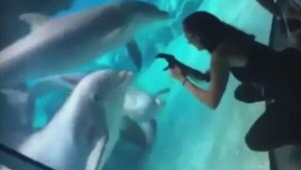 Delfín protéza Američanky - Sputnik Česká republika