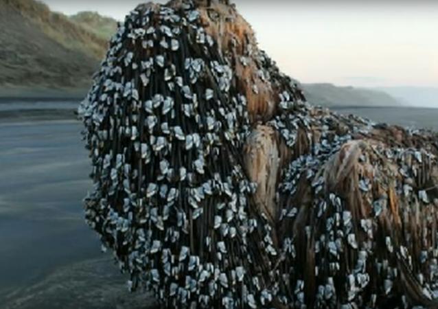 Tajemný objekt byl vyhozen na břeh na Novém Zélandu