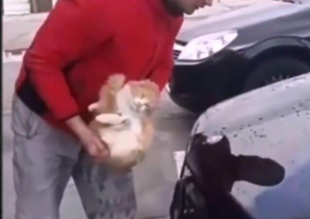 Umyl muž auto kočkou