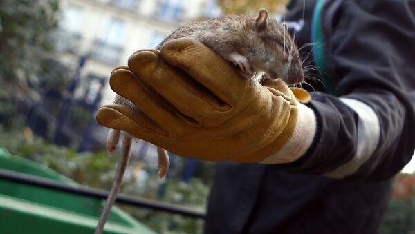 Potkan - Sputnik Česká republika