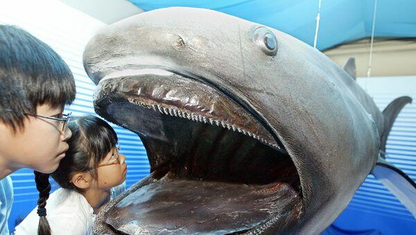 Vycpaný žralok velkoústý - Sputnik Česká republika