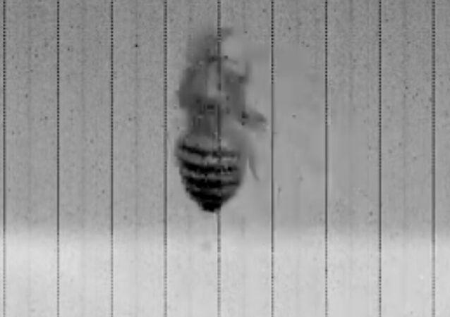 Tohle video prozradí tajemství, proč je tak těžké chytat mouchy