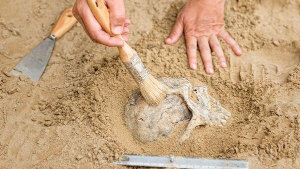 Archeolog na místě vykopávek - Sputnik Česká republika