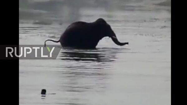 V Indii byl natočen útok slona na muže - Sputnik Česká republika