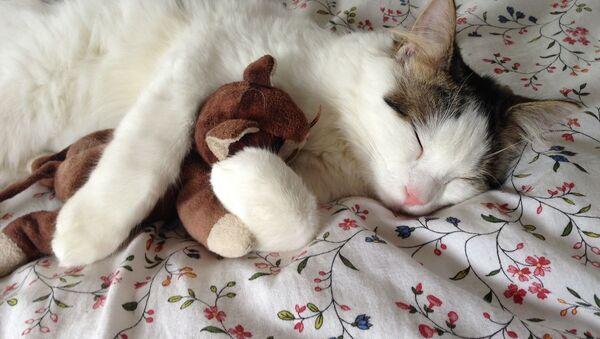 Kočka s touhou během spánku - Sputnik Česká republika