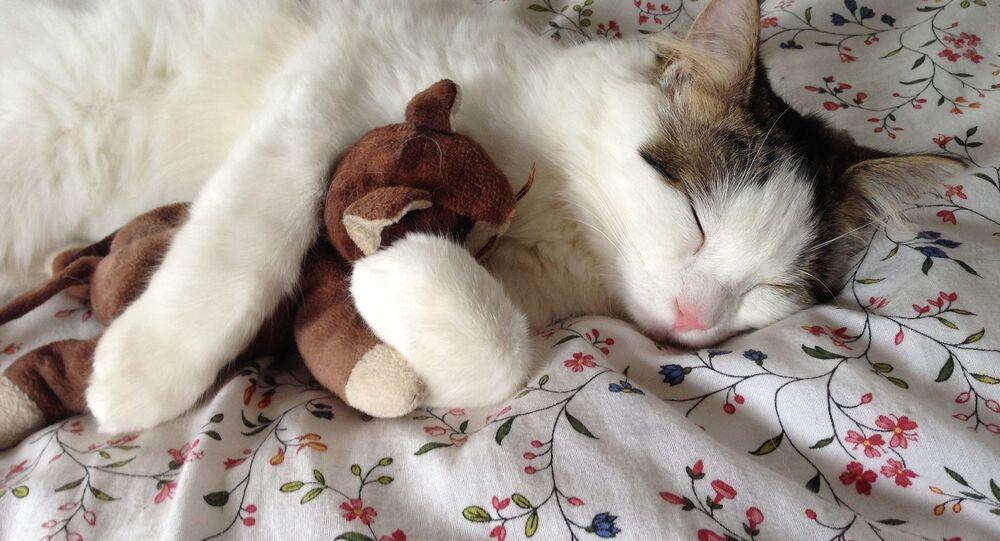 Kočka s touhou během spánku