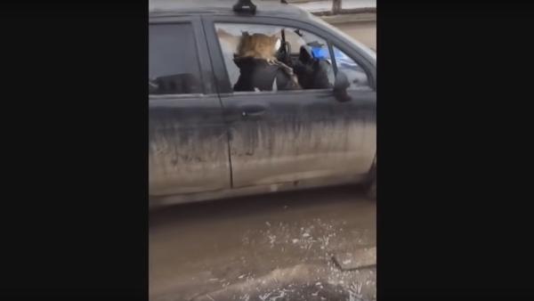 Blondýnka rozsekala sekyrou auto před synovýma očima, aby se nedostalo policii - Sputnik Česká republika