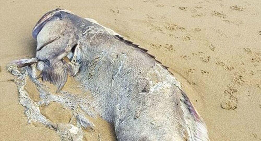 Obrovský mořský tvor nalezli na pláži v parku Moure