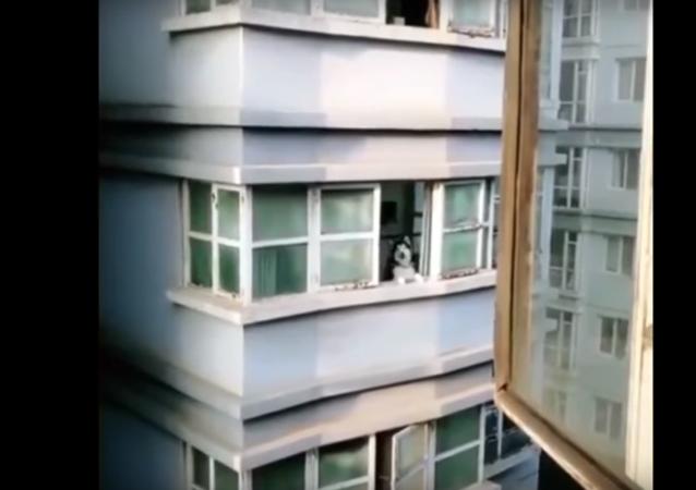 """Na internetu získává stále zhlédnutí VIDEO, kde husky """"rozmlouvá"""" s člověkem"""