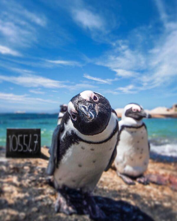 Fotografie tučňáků z Jihoafrické republiky - Sputnik Česká republika